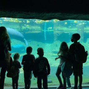 Family at ZooTampa looking at the manatees